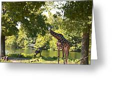 Zoo Landscape Greeting Card