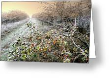 Autumn Frosts Greeting Card