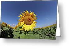 Bee On Blooming Sunflower Greeting Card