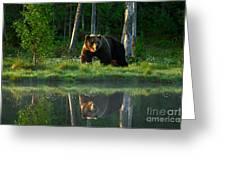 Big Brown Bear Walking Around Lake In Greeting Card