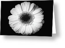 Black And White Flower Greeting Card by Mirko Chessari