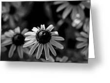 Black-eyed Susan  Greeting Card by Jeff Phillippi
