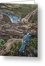 Blue Jay Stand Off Greeting Card