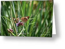 Buckeye Butterflies Greeting Card