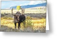 Bull Moose Greeting Card by Michael Chatt