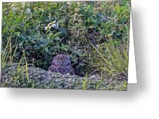 Burrowing Owl Greeting Card by Paul Schultz