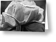Close-up Of A Rose, Los Angeles County Greeting Card