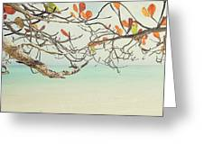 Colorful Tree North Shore Greeting Card by Charmian Vistaunet