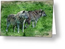 Digital Watercolor Painting Of Beautiful Timber Wolf Cnis Lupus  Greeting Card