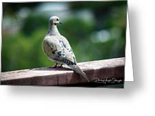Dove On The Deck Greeting Card