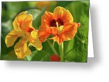 Fall Flowers Greeting Card