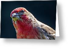 Finch Greeting Card
