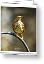 Georgia State Bird - Brown Thrasher Greeting Card