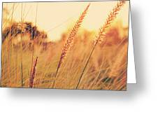Glowing Fountain Grass - Hipster Photo Square Greeting Card by Charmian Vistaunet