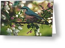 Harbinger Of Spring Greeting Card