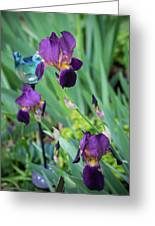 Iris In The Cottage Garden Greeting Card