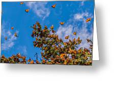 Monarch Butterflies On Tree Branch In Greeting Card
