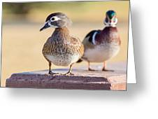 Pair Of Wood Ducks Greeting Card
