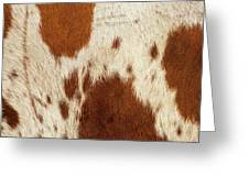 Pattern Of A Longhorn Bull Cowhide. Greeting Card by Rob D Imagery
