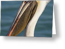 Pelican Close Up Greeting Card by Paul Schultz