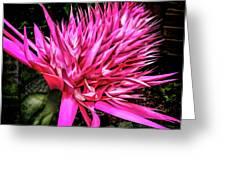 Pink Princess Bromeliad Greeting Card