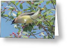 Ready For Take Off Greeting Card by Sally Sperry