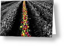 Rows Of Tulips Greeting Card
