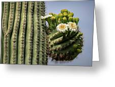 Saguaro Blooms To The Sky  Greeting Card