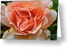 Salmon Pink Rose Greeting Card