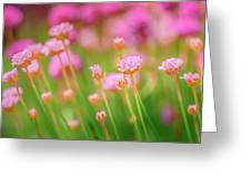 Sea Thrift  Greeting Card