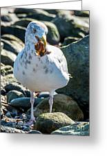 Seagull With Sail Greeting Card