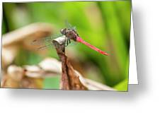 Small Beautiful Dragonfly Greeting Card