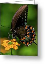 Spicebush Swallowtail On Lantana Blooms Greeting Card