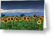 Sunflowers Under A Stormy Sky Greeting Card by John De Bord