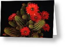The Beauty Of Red  Greeting Card