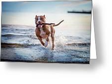The Dog In The Water, Swim, Splash Greeting Card