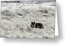 W18 Greeting Card by Joshua Able's Wildlife