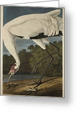 Whooping Crane  From The Birds Of America  Greeting Card