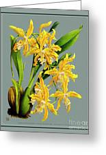 Orchid Vintage Print On Tinted Paperboard Greeting Card