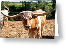 Longhorn Bull In The Paddock Greeting Card