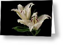 White Lily On Black. Greeting Card
