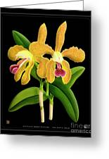 Vintage Orchid Print On Black Paperboard Greeting Card