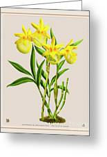 Orchid Vintage Print On Colored Paperboard Greeting Card