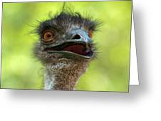 Australian Emu Outdoors Greeting Card