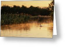 Beautiful Dawn Landscape Image Of River Thames At Lechlade-on-th Greeting Card
