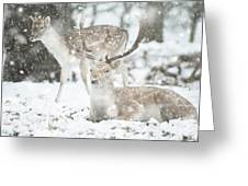 Beautiful Image Of Fallow Deer In Snow Winter Landscape In Heavy Greeting Card