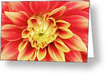 Dahlia 9 Greeting Card