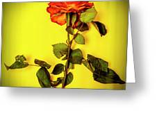Dying Flower Against A Yellow Background Greeting Card