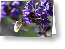 Fly Bee Greeting Card