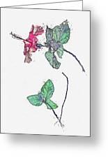 Hibiscus 2 -  Watercolor By Ahmet Asar Greeting Card
